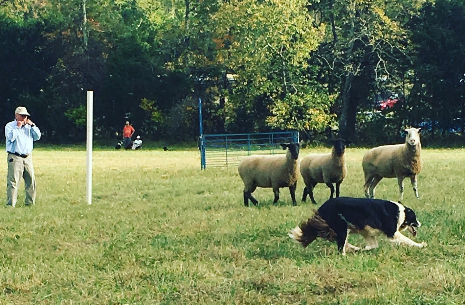 Fall Fiber Festival - Sheepdog Trial